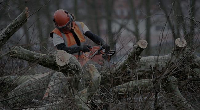 Traverse City Tree Service