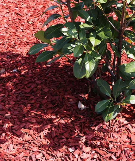 Accurate Outdoor LLC Mulching