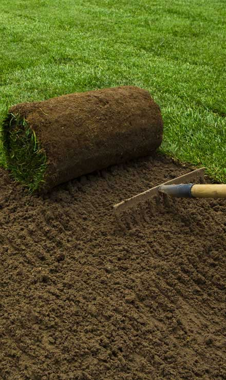 Accurate Outdoor LLC Sod Installation